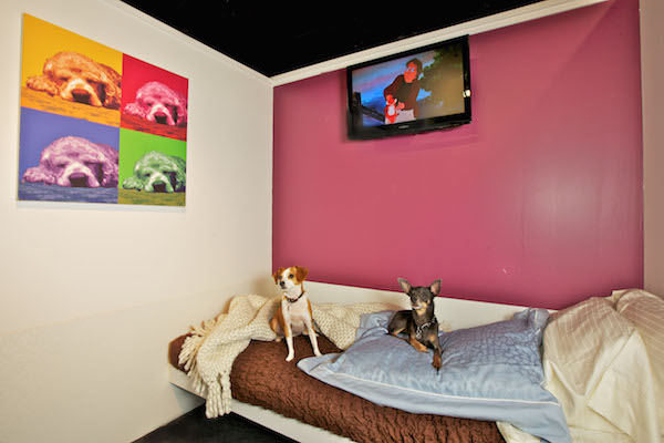 File Photo Courtesy of D Pet Hotels Chelsea